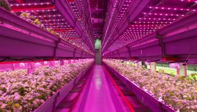 the-future-of-agriculture-is-an-indoor-vertical-farm-half-the-size-of-a-wal-mart